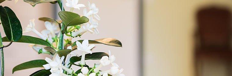 Blumentopf | Ordination Zukriegel
