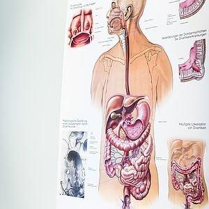 Schautafel Verdauungssystem | Ordination Zukriegel